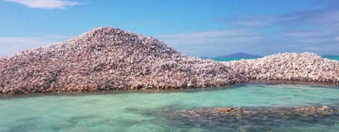 Conch Shell Mounds