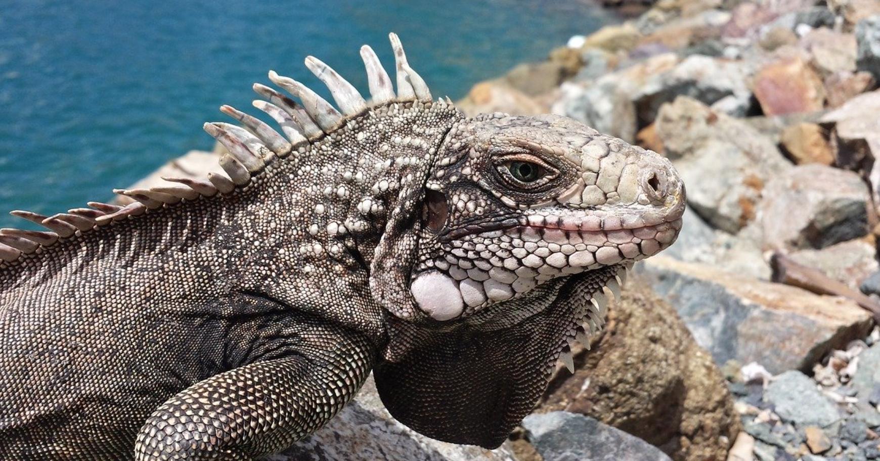 Iguana Sanctuary