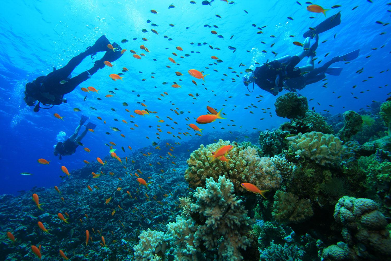 Dive Locations